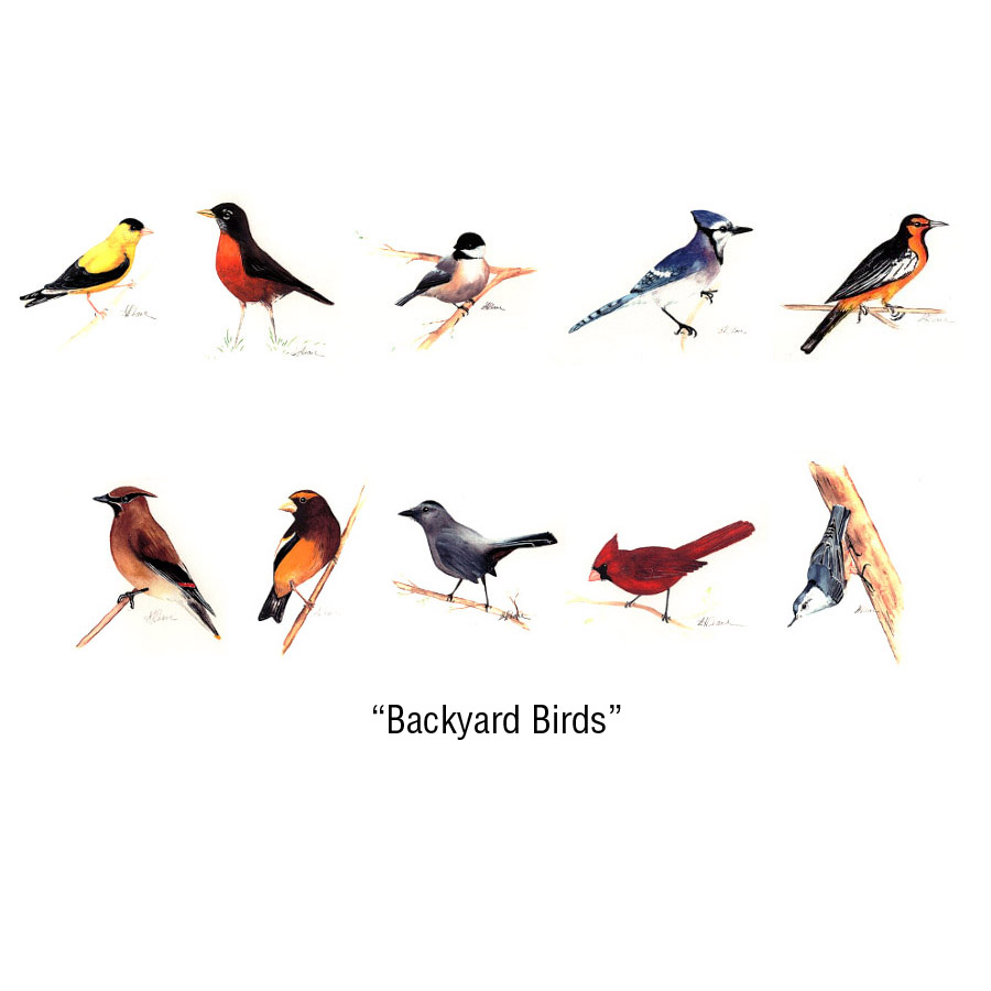 Backyard Birds Notecards