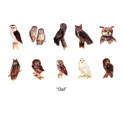Owl Notecards
