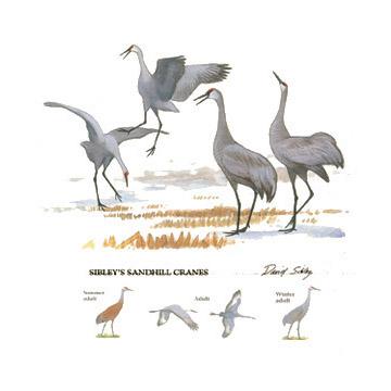 Sandhill Cranes Tee