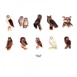 Owl Notecards